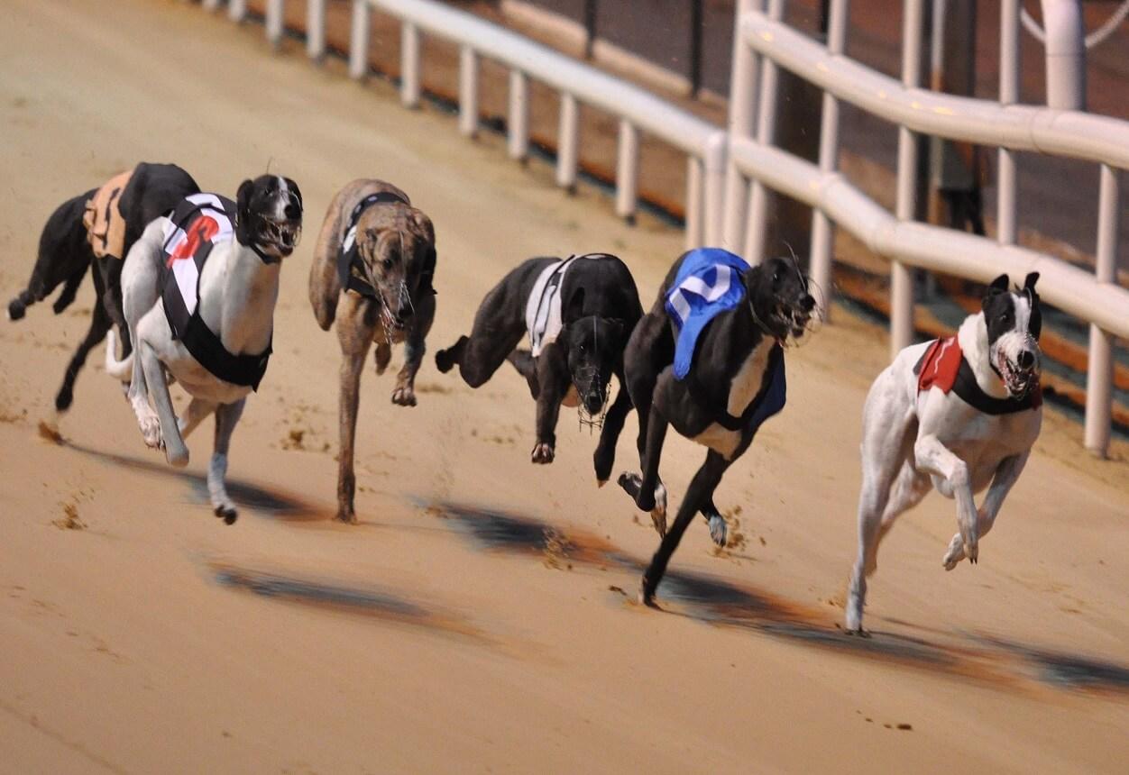 Best bet on greyhound racing sport betting stocks